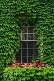Καλυμμένο κισσός παράθυρο Στοκ εικόνες με δικαίωμα ελεύθερης χρήσης