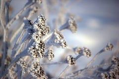 καλυμμένο κλάδος χιόνι Στοκ Φωτογραφίες