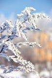 καλυμμένο κλάδος χιόνι Στοκ εικόνα με δικαίωμα ελεύθερης χρήσης