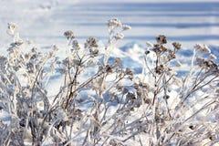 καλυμμένο κλάδος χιόνι Στοκ φωτογραφία με δικαίωμα ελεύθερης χρήσης