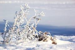καλυμμένο κλάδος χιόνι Στοκ εικόνες με δικαίωμα ελεύθερης χρήσης