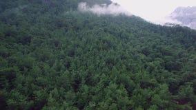 Καλυμμένο ο Forrest βουνό απόθεμα βίντεο