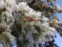 Καλυμμένο πάγος δέντρο Στοκ φωτογραφία με δικαίωμα ελεύθερης χρήσης
