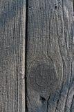 Καλυμμένο παγετός ξύλο Στοκ Εικόνες