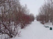 καλυμμένο χιόνι πάρκων Στοκ Εικόνα