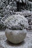 καλυμμένο χιόνι φυτών στοκ φωτογραφίες με δικαίωμα ελεύθερης χρήσης