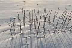 καλυμμένο halm πεδίων χιόνι σκ& Στοκ φωτογραφίες με δικαίωμα ελεύθερης χρήσης
