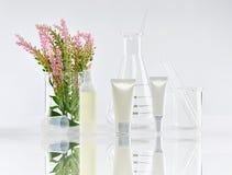 Καλλυντικά εμπορευματοκιβώτια μπουκαλιών με τα πράσινα βοτανικά φύλλα και επιστημονικά γυαλικά, κενή συσκευασία ετικετών για το μ Στοκ φωτογραφίες με δικαίωμα ελεύθερης χρήσης