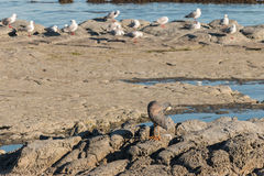 Καλλωπίζοντας ερωδιός και seagulls Στοκ εικόνες με δικαίωμα ελεύθερης χρήσης