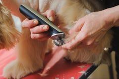 Καλλωπισμός ποδιών σκυλιών Στοκ φωτογραφία με δικαίωμα ελεύθερης χρήσης