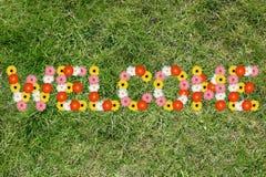 Καλωσορίστε με τη φύση χλόης λιβαδιών άνοιξη λουλουδιών λουλουδιών Στοκ Εικόνες