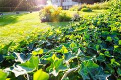 καλό πράσινο υψηλό πανοραμικό καλοκαίρι διάλυσης σύνθεσης ανασκόπησης Στοκ Φωτογραφίες