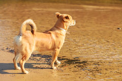 Καλό σκυλί που παίζει υπαίθριο μόνο Στοκ φωτογραφία με δικαίωμα ελεύθερης χρήσης