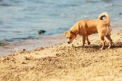 Καλό σκυλί που παίζει υπαίθριο μόνο Στοκ Εικόνες