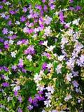 καλό φύλλο λουλουδιών Στοκ εικόνα με δικαίωμα ελεύθερης χρήσης