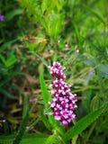 καλό φύλλο λουλουδιών Στοκ Εικόνα
