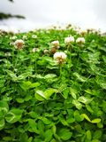 καλό φύλλο λουλουδιών Στοκ εικόνες με δικαίωμα ελεύθερης χρήσης