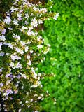 καλό φύλλο λουλουδιών &grass Στοκ Εικόνες