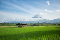 καλύβα στον τομέα ρυζιού στοκ φωτογραφίες
