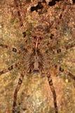 Καλύπτοντας αράχνη Στοκ φωτογραφίες με δικαίωμα ελεύθερης χρήσης