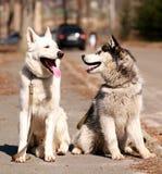 Καλύτεροι φίλοι Στοκ Φωτογραφία