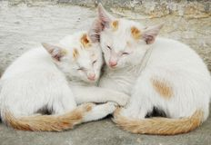 Καλύτερο γατάκι Στοκ εικόνες με δικαίωμα ελεύθερης χρήσης