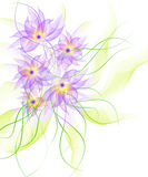 καλύτερο λουλούδι ανα&s Στοκ Εικόνες