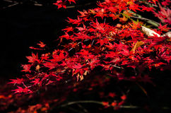 Καλύτερο φθινόπωρο στην Ιαπωνία Στοκ φωτογραφίες με δικαίωμα ελεύθερης χρήσης