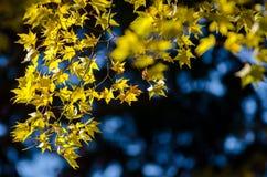 Καλύτερο φθινόπωρο στην Ιαπωνία Στοκ Εικόνα
