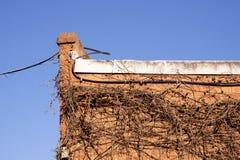 Καλώδιο και ξηρό αναρριχητικό φυτό στην πλευρά του τούβλινου κτηρίου Στοκ Εικόνα
