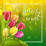 Κείμενο άνοιξη με το λουλούδι τουλιπών Διανυσματική απεικόνιση EPS10 Στοκ φωτογραφία με δικαίωμα ελεύθερης χρήσης