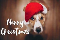 Κείμενο Χαρούμενα Χριστούγεννας, εποχιακό σημάδι καρτών χαιρετισμών σκυλί σε Santa Στοκ φωτογραφίες με δικαίωμα ελεύθερης χρήσης