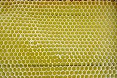 Κενά κίτρινα κύτταρα μελισσών, υπόβαθρο Στοκ εικόνες με δικαίωμα ελεύθερης χρήσης