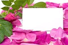 κενά πέταλα καρτών Στοκ Εικόνες