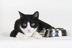 κενά τρόφιμα γατών κύπελλων Στοκ Εικόνες