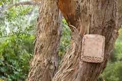 Κενή ένωση σημαδιών πετρών στο ξηρό δέντρο με την αποφλοίωση φλοιών μακριά Στοκ φωτογραφία με δικαίωμα ελεύθερης χρήσης