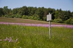 Κενή ξύλινη θέση σημαδιών στο λιβάδι λουλουδιών Στοκ Εικόνες