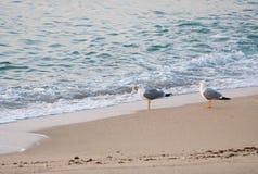 Κενή παραλία κύματος θάλασσας ουρανού μυγών δύο γλάρων Στοκ εικόνες με δικαίωμα ελεύθερης χρήσης