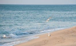 Κενή παραλία κύματος θάλασσας ουρανού μυγών δύο γλάρων Στοκ φωτογραφία με δικαίωμα ελεύθερης χρήσης