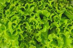 κενή πράσινη σύσταση κειμένων μαρουλιού ενθέτων σχεδίου Πλήρης πράσινη σαλάτα πλαισίων Στοκ φωτογραφία με δικαίωμα ελεύθερης χρήσης