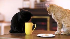 Κενή συσκευή ταμπλετών πέρα από έναν ξύλινο πίνακα χώρου εργασίας με το φλυτζάνι του τσαγιού και της γάτας Καφές γατών απόθεμα βίντεο