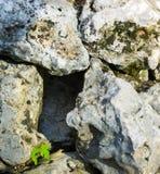 Κενή τρύπα μεταξύ μερικών μεγάλων βράχων με τίποτα κενό ζωικό σπίτι εσωτερικών στοκ φωτογραφίες