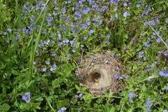 Κενή φωλιά πουλιών ` s στην πράσινη χλόη στοκ φωτογραφία με δικαίωμα ελεύθερης χρήσης