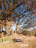Κενοί ξύλινοι κορμοί δέντρων φθινοπώρου πάγκων πάρκων κανένας άνθρωπος Στοκ Εικόνα
