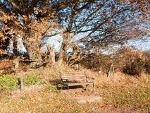 Κενοί ξύλινοι κορμοί δέντρων φθινοπώρου πάγκων πάρκων κανένας άνθρωπος Στοκ φωτογραφίες με δικαίωμα ελεύθερης χρήσης