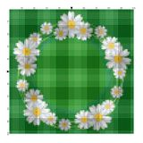 Κεντήστε camomile λουλουδιών γιατί μια κεντητική δίνει έναν σταυρό Στοκ Εικόνα