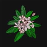Κεντητική Frangipani λουλουδιών και φύλλα, Plumeria στη μαύρη πλάτη Στοκ Φωτογραφίες