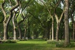 κεντρικά δέντρα πάρκων Στοκ εικόνες με δικαίωμα ελεύθερης χρήσης