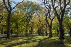 κεντρικά δέντρα πάρκων Στοκ φωτογραφίες με δικαίωμα ελεύθερης χρήσης