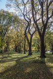 κεντρικά δέντρα πάρκων Στοκ Φωτογραφία